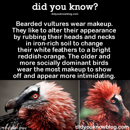 6 Bearded vultures