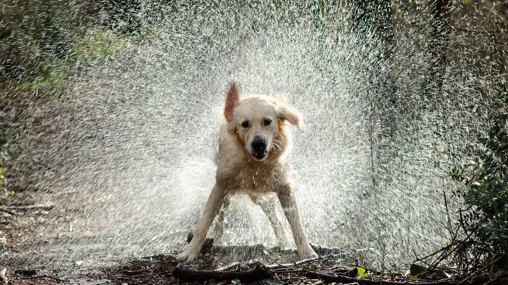 What Can We Learn From A Wet Dog S Shake